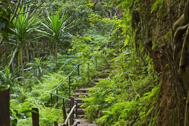 Nairobi on a Budget Karura Forest Trail
