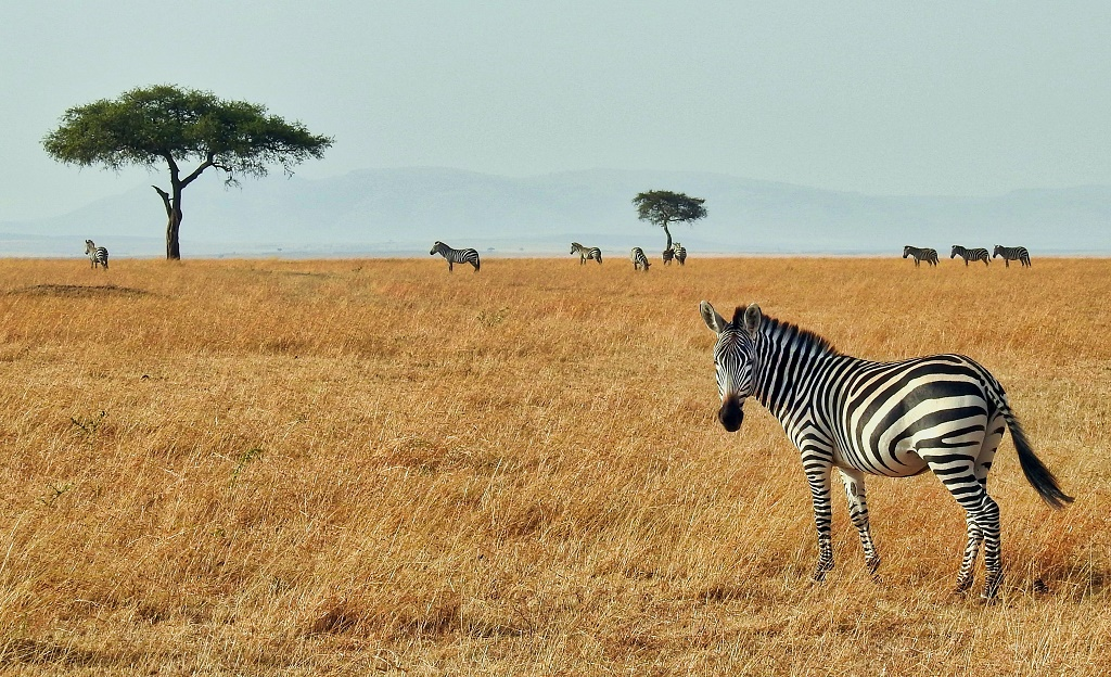 Top 5 Tourist Destinations to Visit in Africa 5