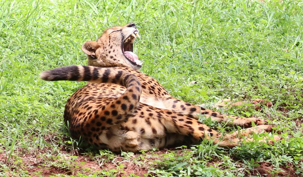 Top 5 Safari Animals in Kenya