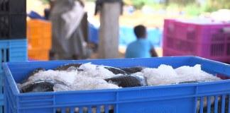 Kenyan-Collective-Kenyan-Fishermen-on-CNN-1