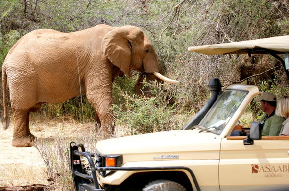 Thrilling elephant sighting during a game drive in the Samburu.