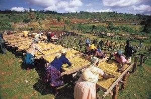 Kenya-agriculture1