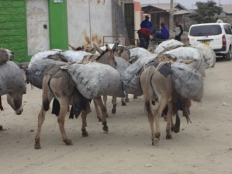Donkey project (1)