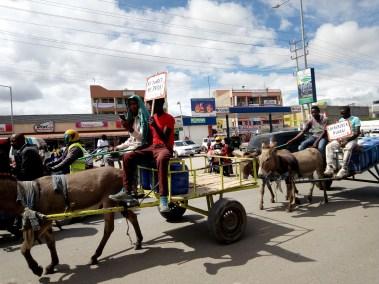 Donkey Day celebrations