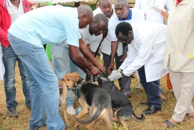 World Rabies Day 2016