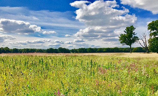 kidmore end gallowstree common winter field swiss farm