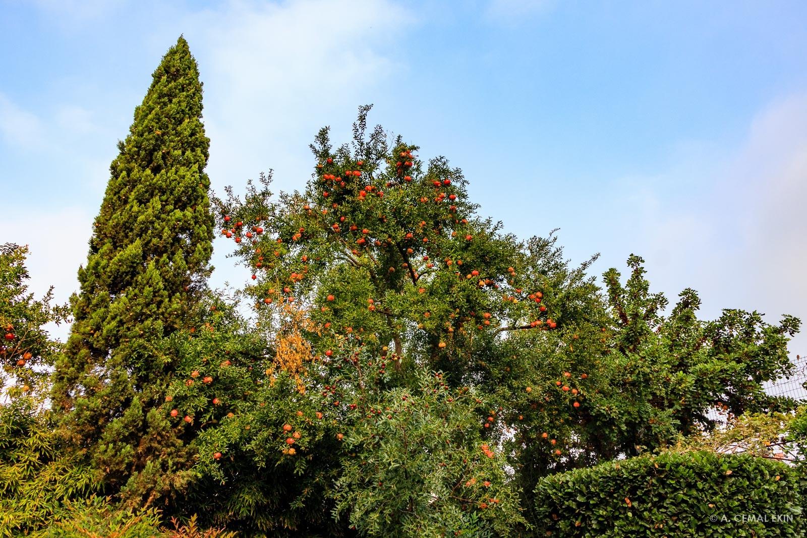Melin House Garden