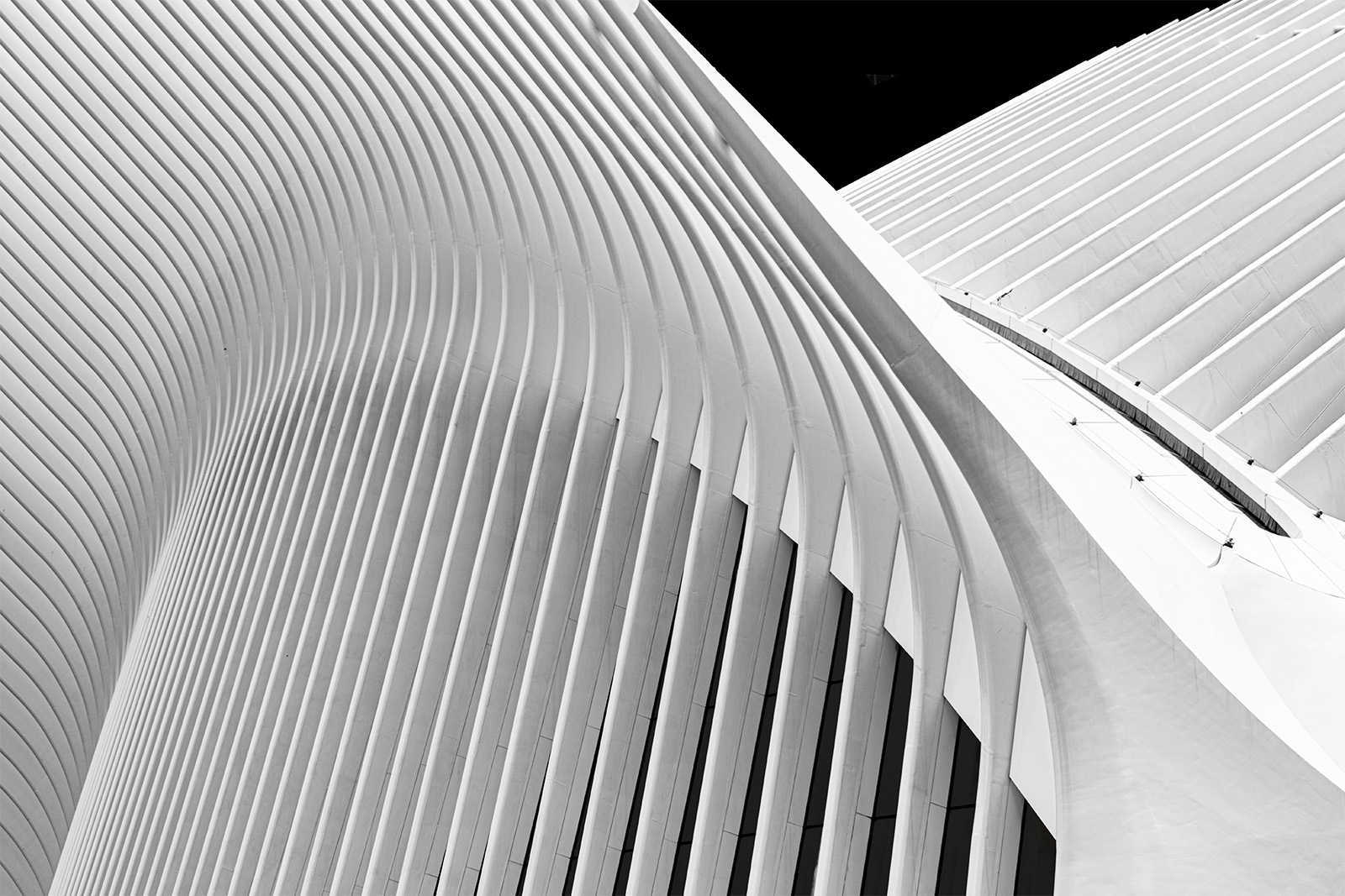 Symphony of Lines by Larry Dunn