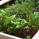 Growing vegetable on Grow bags ഗ്രോബാഗുകളിലെ കൃഷി
