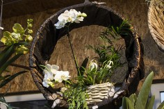 Orchideenausstellung 10-1