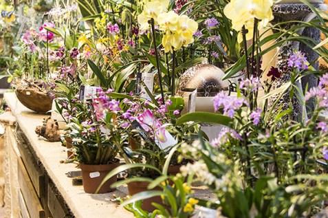 Orchideenausstellung 14-1