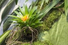 Orchideenausstellung 16-1