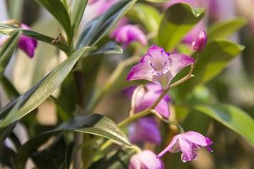 Orchideenausstellung 2-1