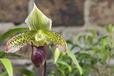 Orchideenausstellung 7-1