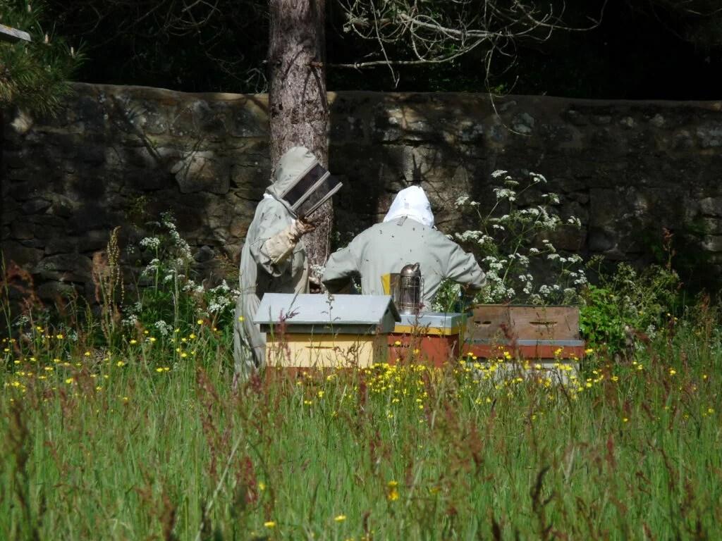 ax petits soins pour les ruches