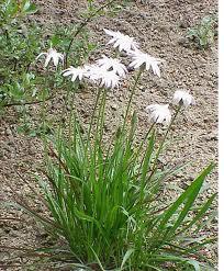 Ülkemizde Endemik Bitki Türleri