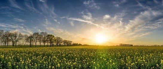 Bitkilerdeki Müthiş Sistemler