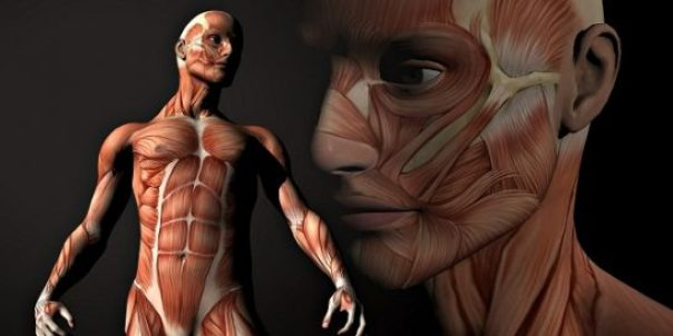 human-body-featured
