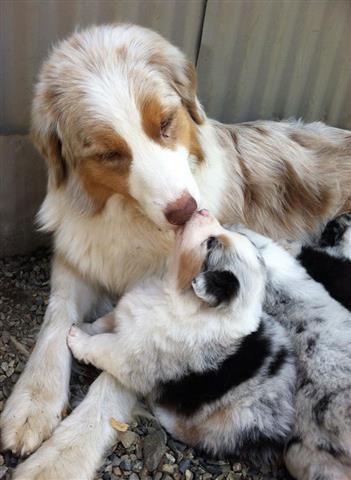 Anne Köpek ve Sevimli Yavruları ( 21 Fotograf )