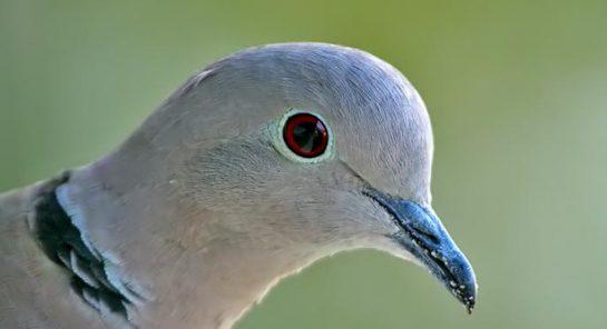 Hz. Mevlana'dan Kuş Hikayesi