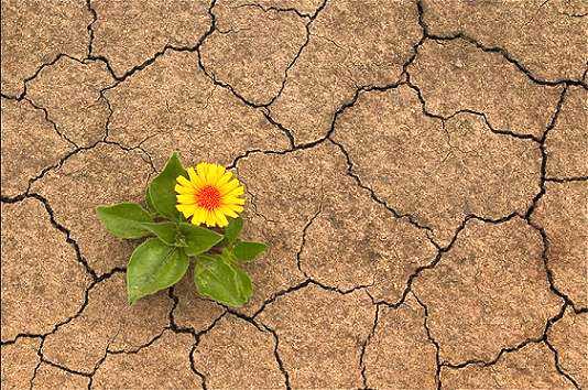 Ekolojik Yaşamaya Katkımız Olmalı