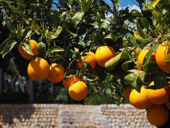 Ağacın Meyvesi Olunca Başını Aşağı Salar - Atasözünün Anlamı