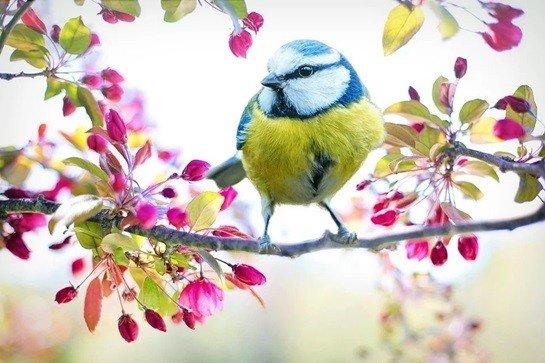 Nevruz bayramında Şiiri-Kısıklı