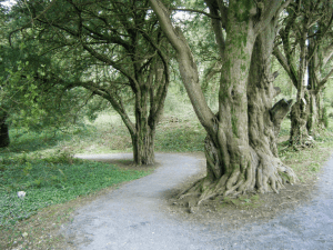 BallySeedy Wood - Nature at it's best!