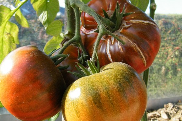 Tomates du jardin