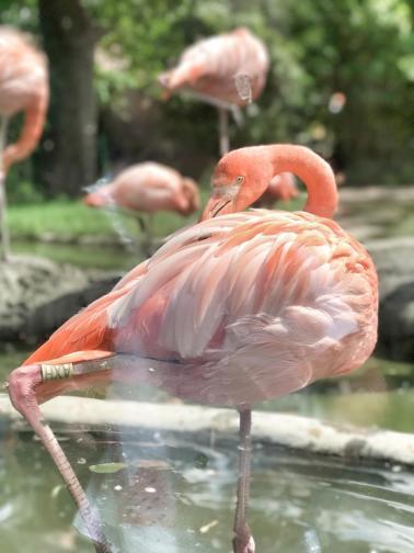 Flamingo Love im Zoo Schönbrunn