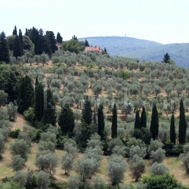 Settignano - a kerti látványba beköszön a ligetes táj az őshonos fafajokkal