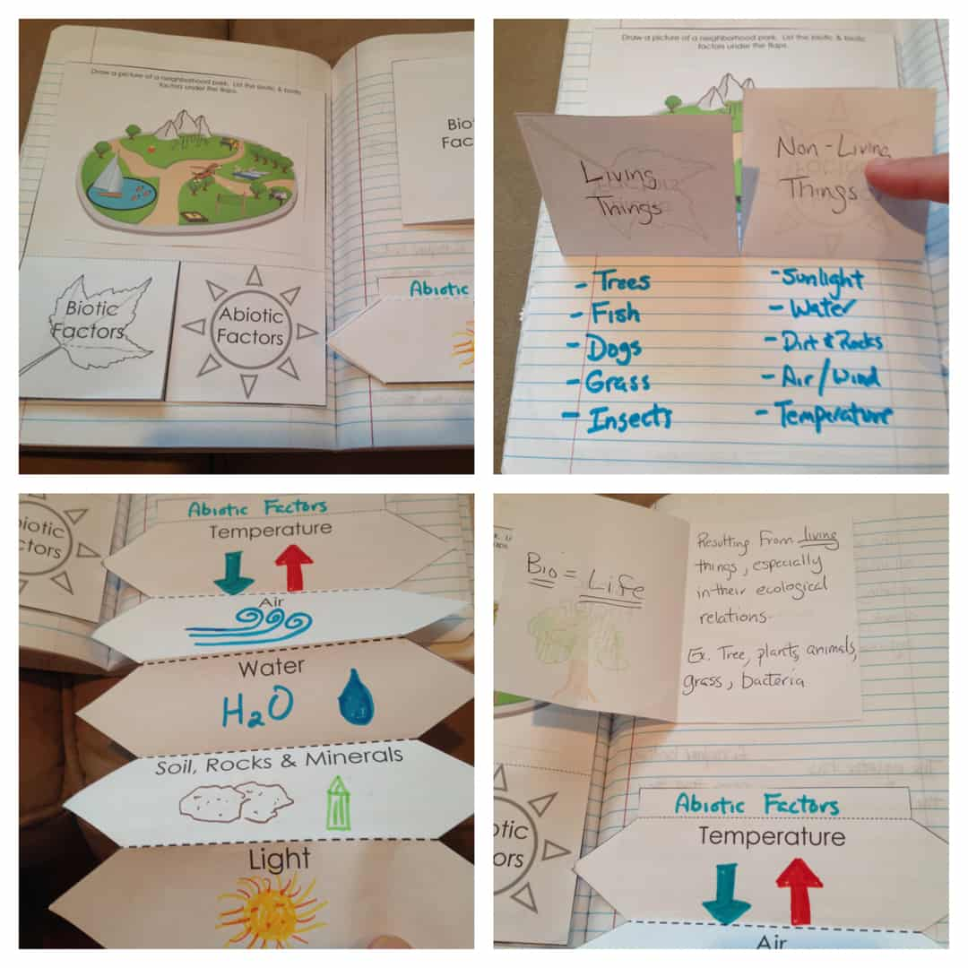 Interactions In An Ecosystem Interactive Notebook Pages