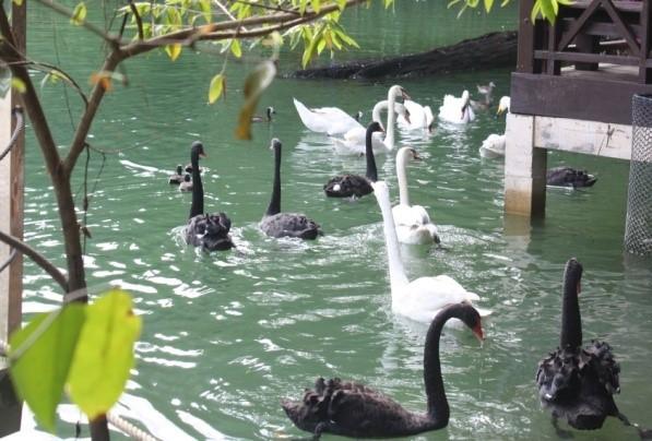Taman_Burung