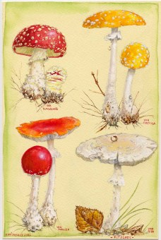 FLY_AGARICS_by_kevcrossley