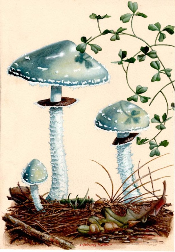Verdigris_Toadstool_1994_by_kevcrossley