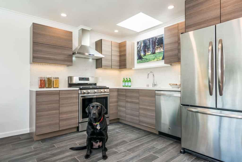 Kitchen-pup