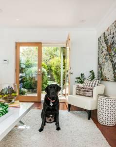 livingroom_puppy