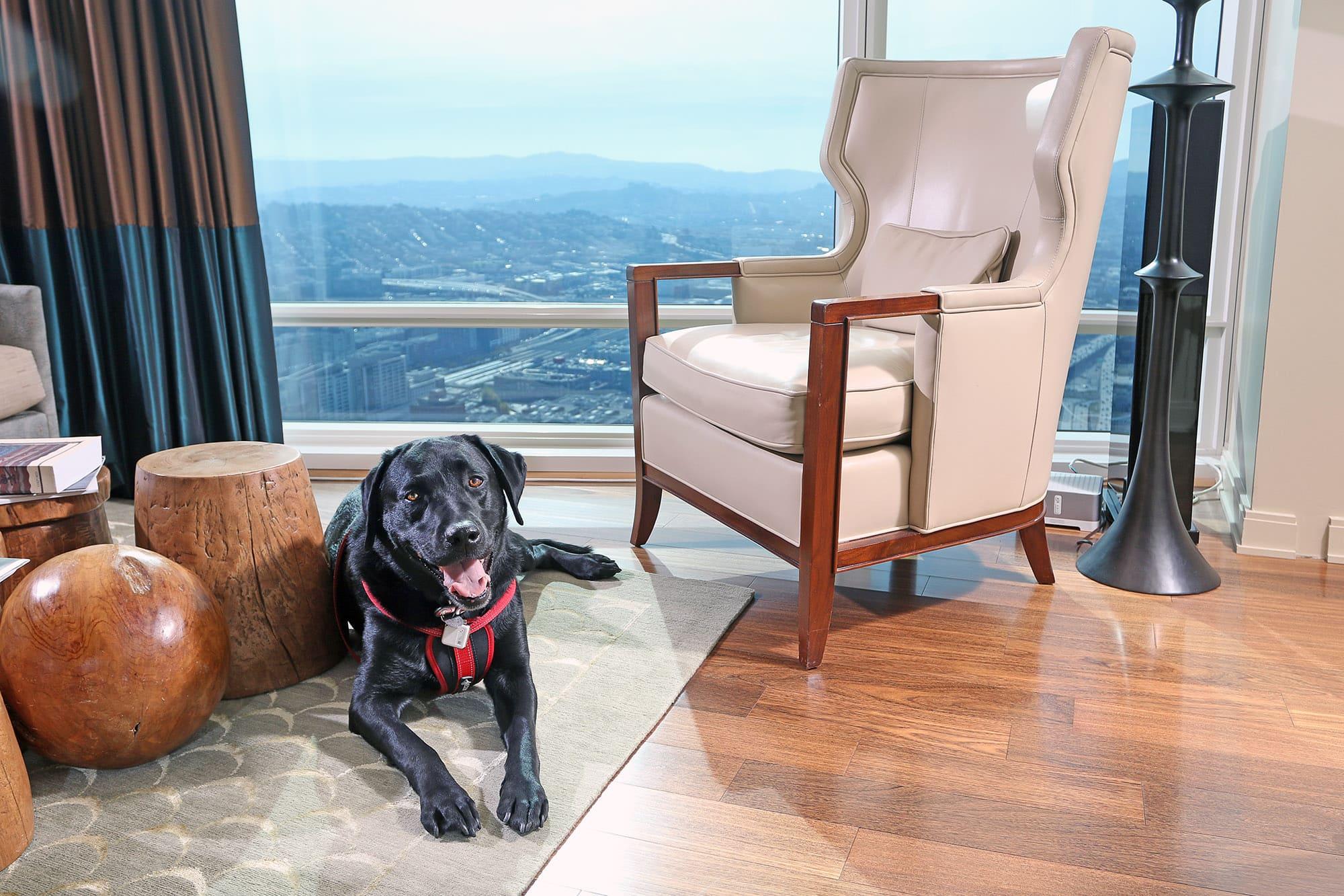 Mr. Raffi, real estate super dog, San Francisco
