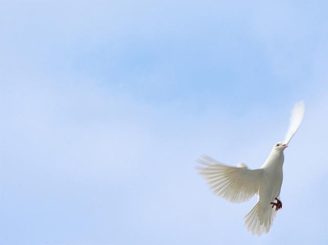ji-packer-on-the-holy-spirit-charismatic-movement