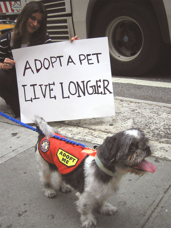 Adopt a Pet from an Animal Shelter