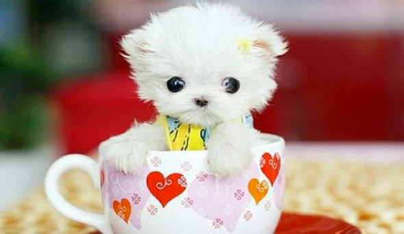 Cup of Cute