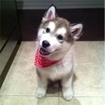 50 Cute Puppies That Will Make You Go Awwwwww