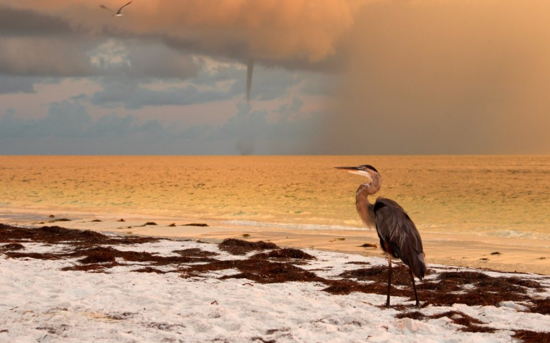 Heron and Waterspout at Sunrise