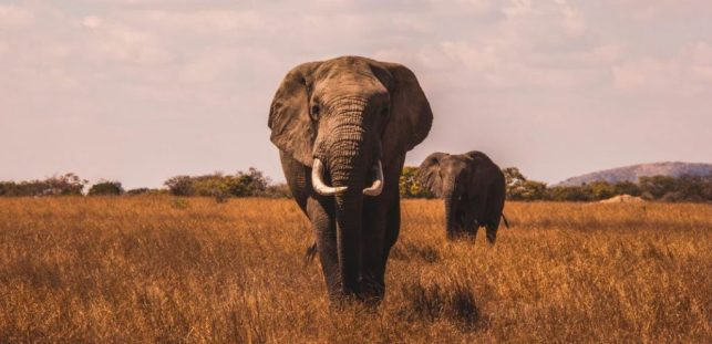 megafauna as evidence for a meat-based diet