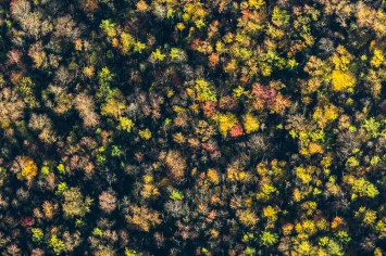 Autumn colors take on new magnificence from above