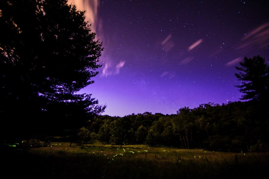 Fireflies at Canterbury Hills, Ancaster, Ontario