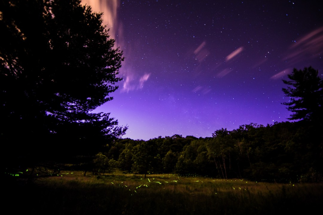Fireflies at Canterbury Hills, Ancaster, Ontario