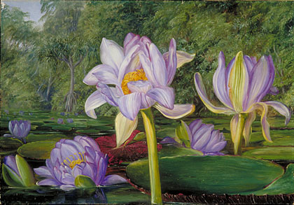Kew Marianne North Gallery Painting 783 View in the