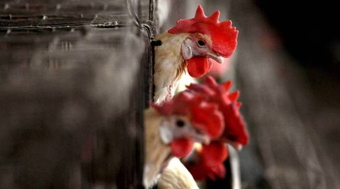 Bird flu death at AIIMS