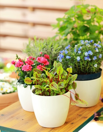Container Gardening Ideas Key Land Homes